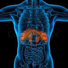 rieducazione del diaframma toracico (RDT)