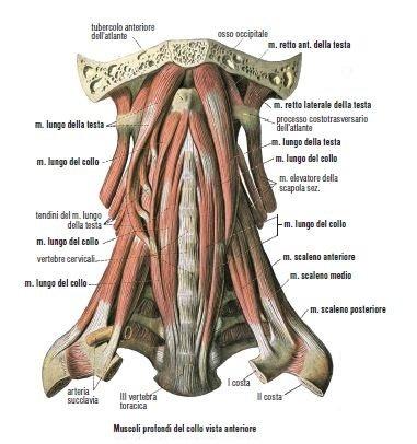 La sindrome dello stretto toracico